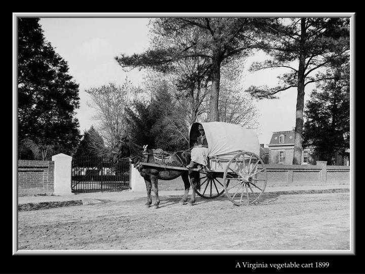 A Virginia vegetable cart 1899