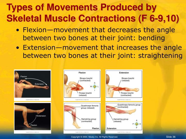 Types of Movements Produced by Skeletal Muscle Contractions (F 6-9,10)