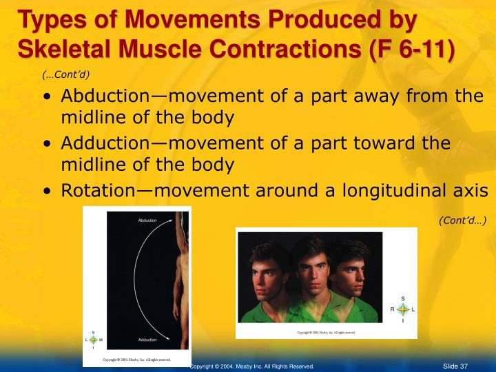 Types of Movements Produced by Skeletal Muscle Contractions (F 6-11)
