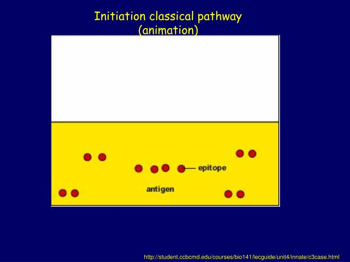 Initiation classical pathway (animation)