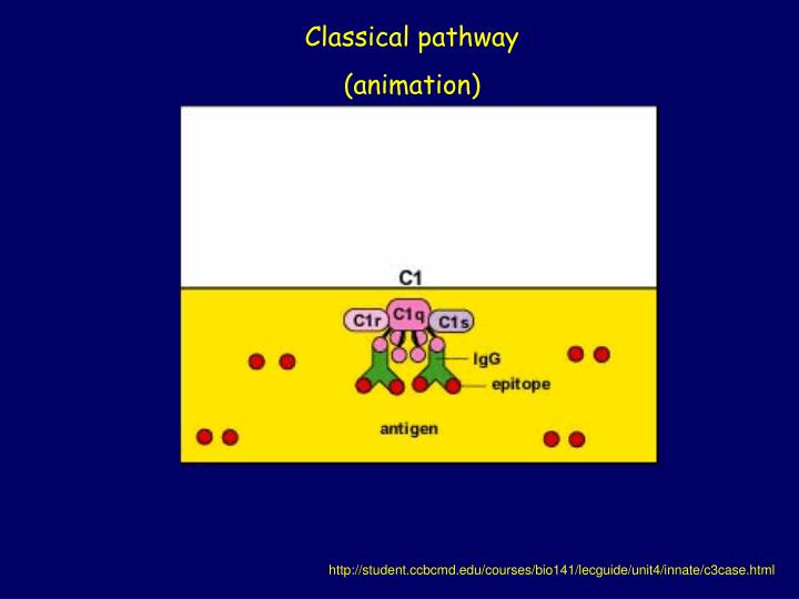 Classical pathway