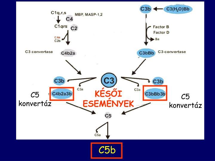 C5 konvertáz