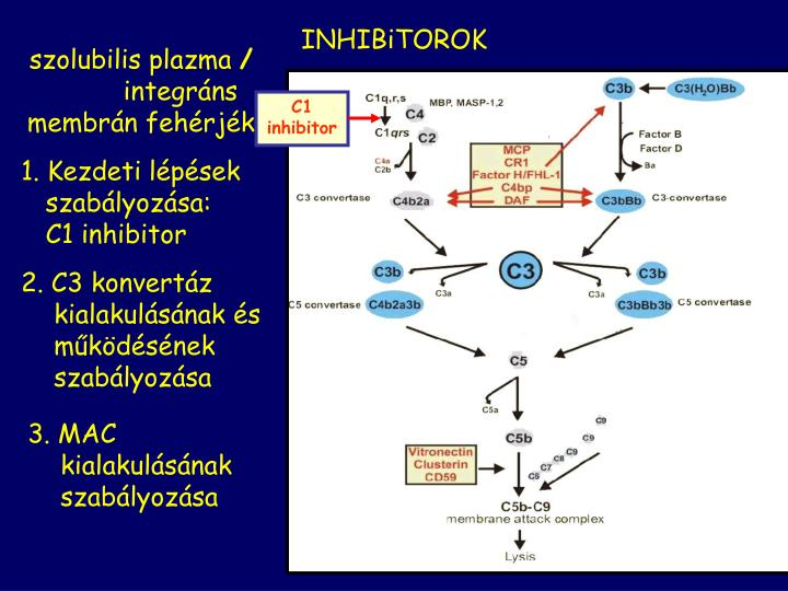 C1 inhibitor