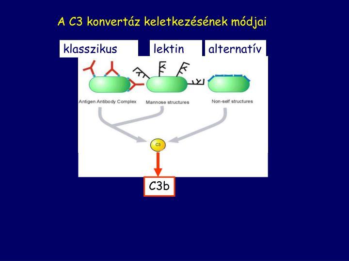 A C3 konvertáz keletkezésének módjai