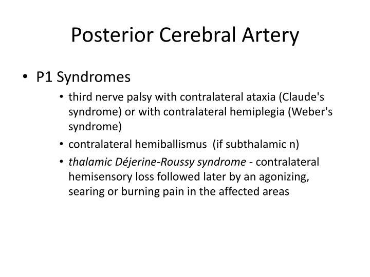 Posterior Cerebral Artery