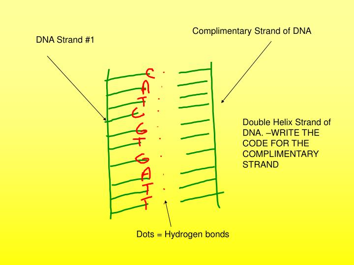 Complimentary Strand of DNA