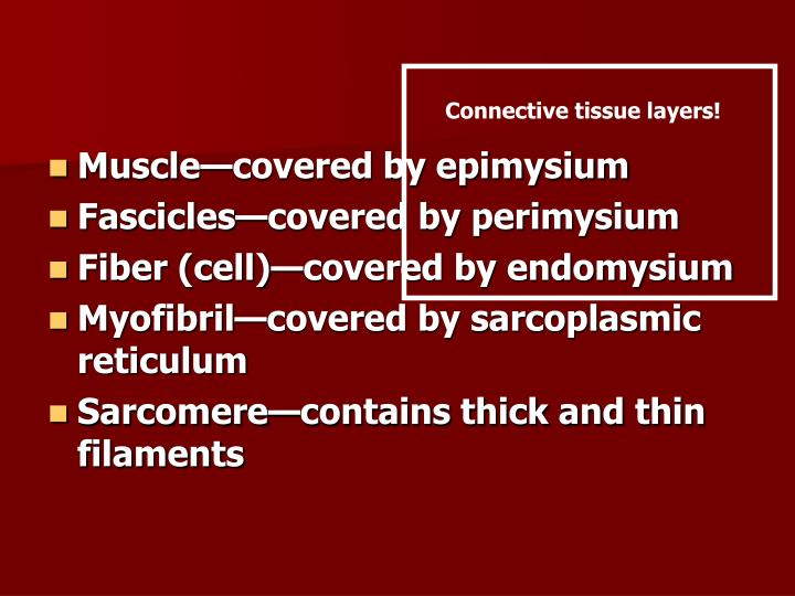 Connective tissue layers!