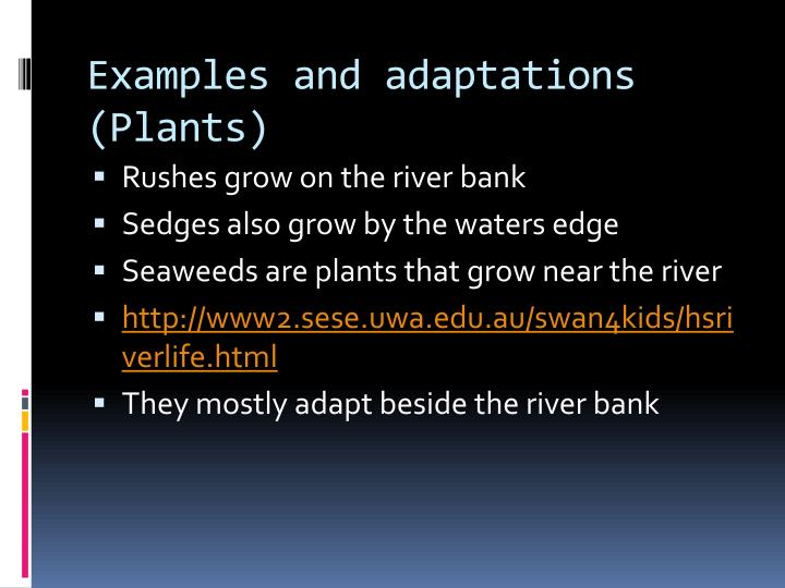 Examples and adaptations (Plants)