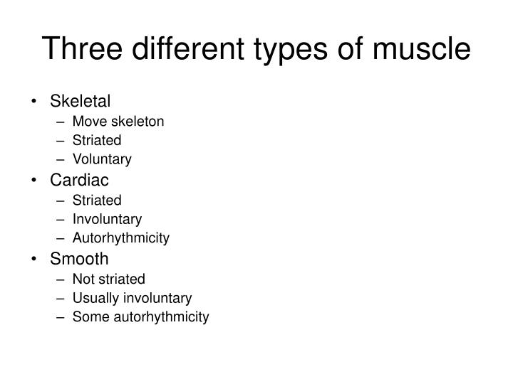 Three different types of muscle