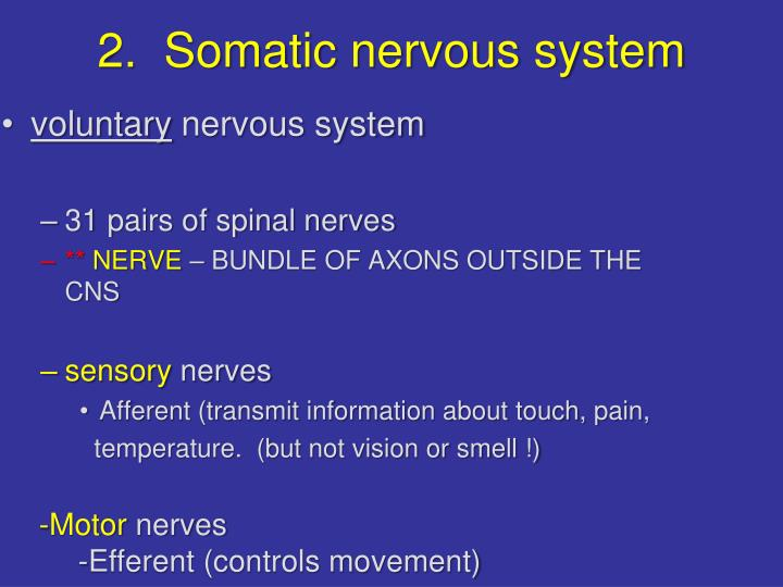 2.  Somatic nervous system