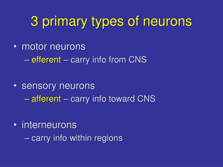 3 primary types of neurons