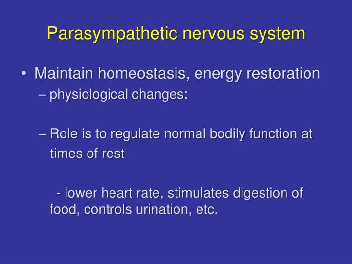 Parasympathetic nervous system
