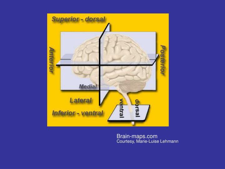 Brain-maps.com