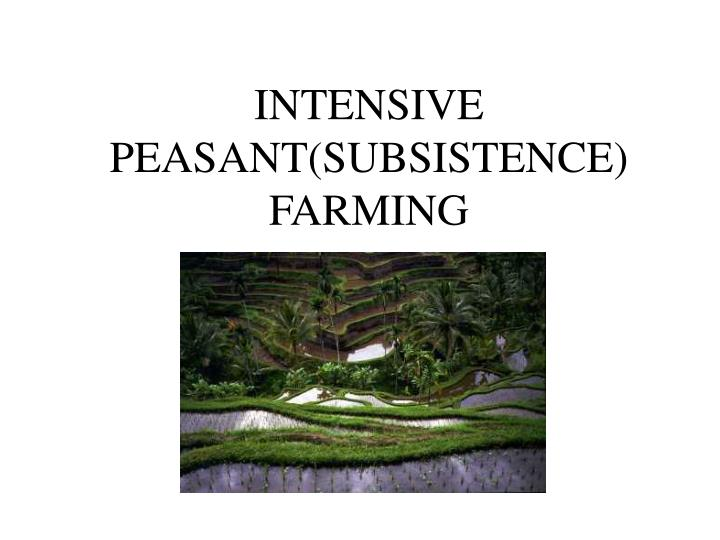 Intensive peasant subsistence farming