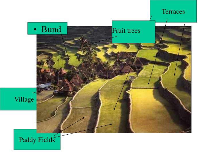 Terraces
