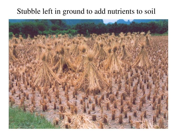 Stubble left in ground to add nutrients to soil