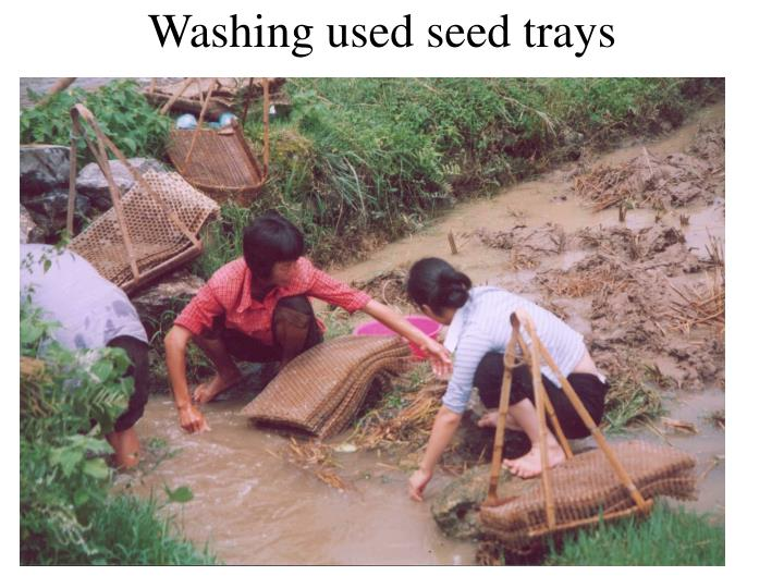 Washing used seed trays
