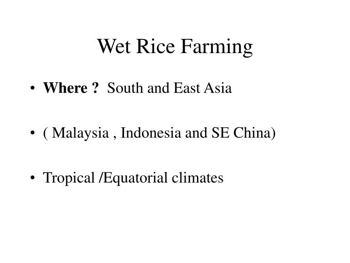 Wet rice farming