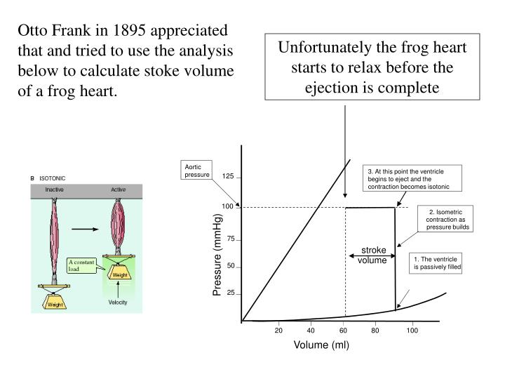 Otto Frank in 1895 appreciated that and tried to use the analysis below to calculate stoke volume of a frog heart.