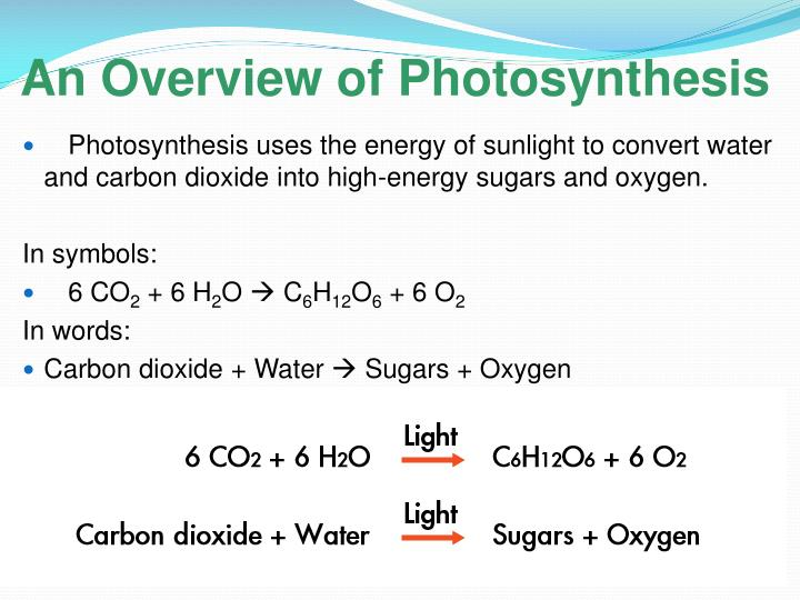 An Overview of Photosynthesis