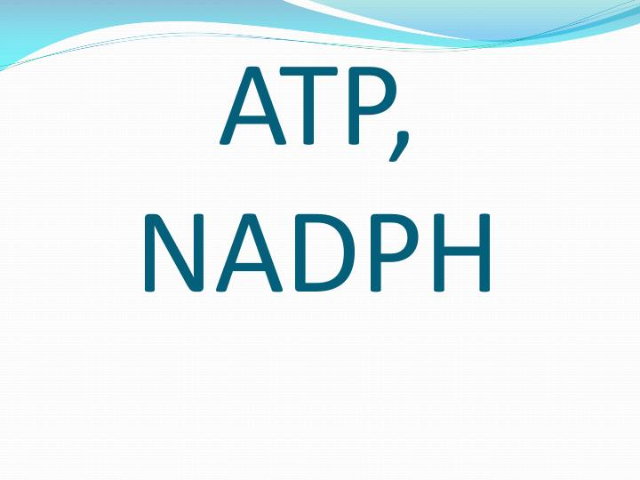 ATP, NADPH