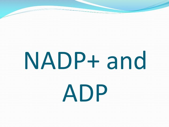 NADP+ and ADP