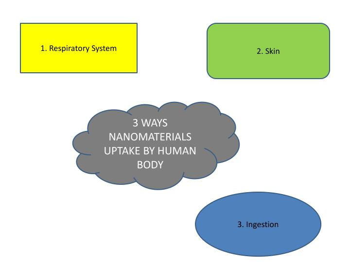 1. Respiratory System