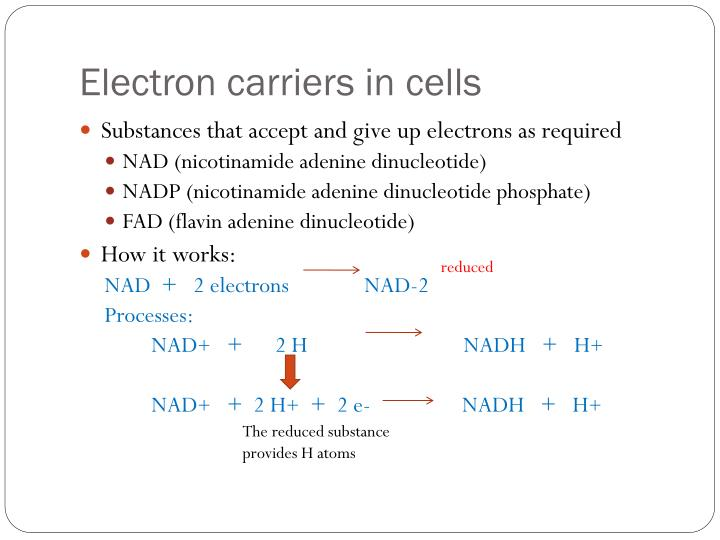 Electron carriers in cells
