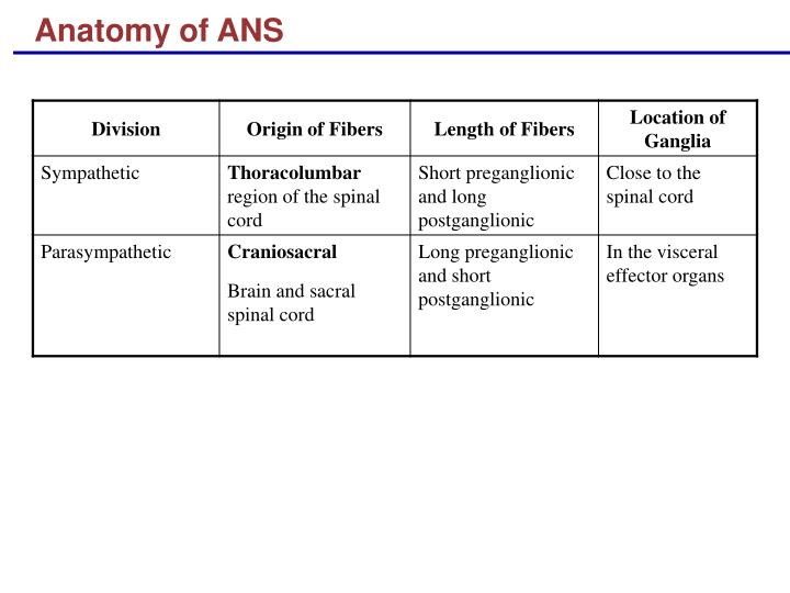 Anatomy of ANS