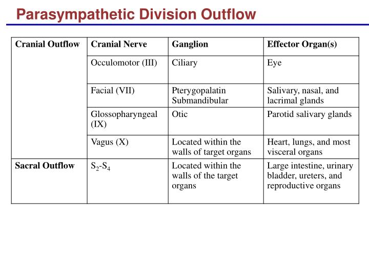 Parasympathetic Division Outflow