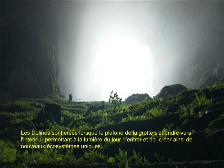 Les Dolines sont créés lorsque le plafond de la grotte s'effondre vers l'intérieur permettant à la lumière du jour d'entrer et de  créer ainsi de nouveaux écosystèmes uniques.