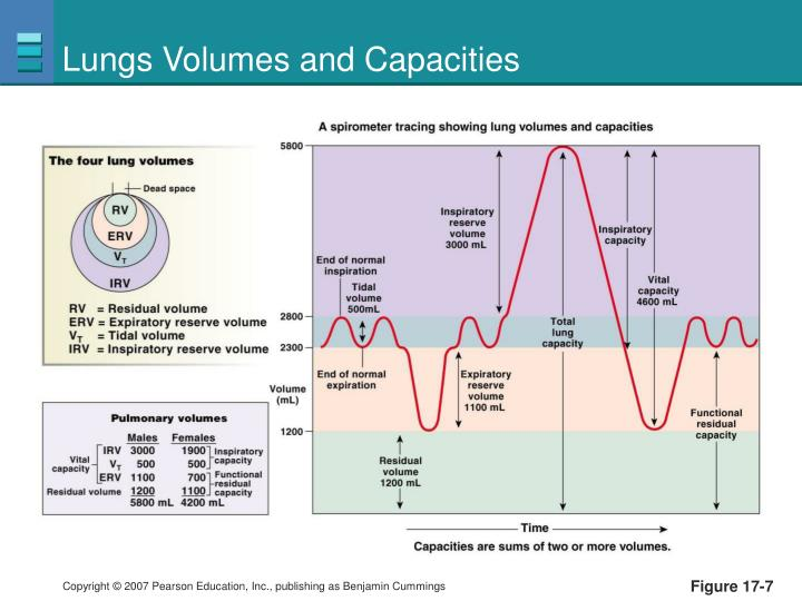 Lungs Volumes and Capacities