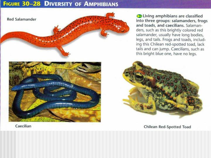 Diversity of Amphibians