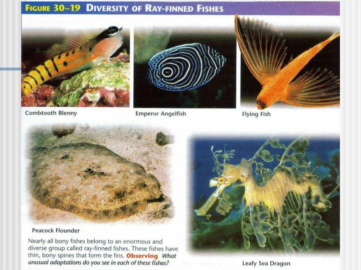 Diversity of Ray-Finned Fishes