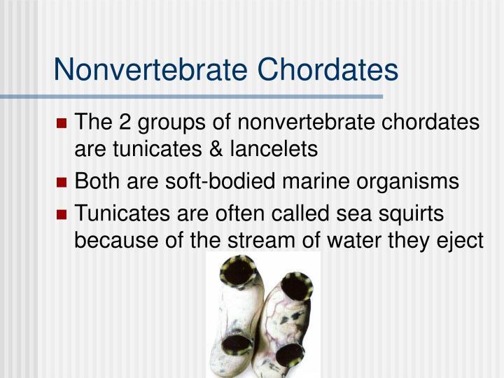 Nonvertebrate Chordates