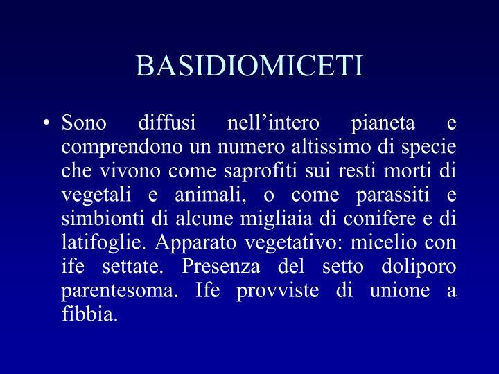 BASIDIOMICETI