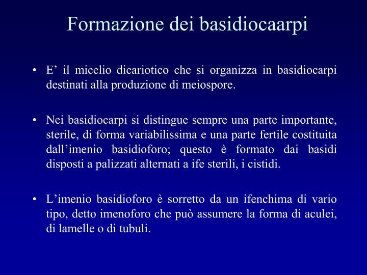 Formazione dei basidiocaarpi