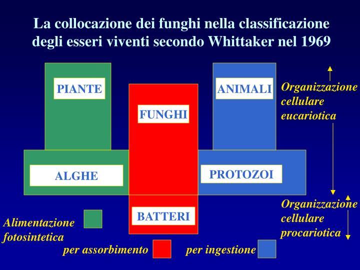 La collocazione dei funghi nella classificazione degli esseri viventi secondo Whittaker nel 1969