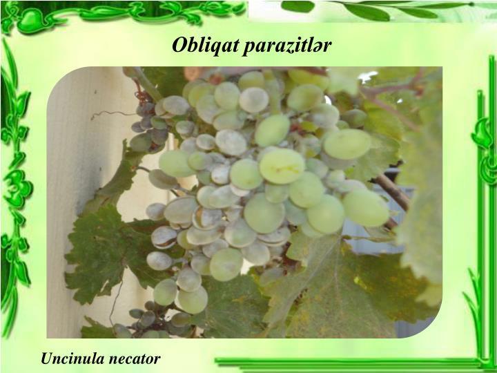 Obliqat parazitlər