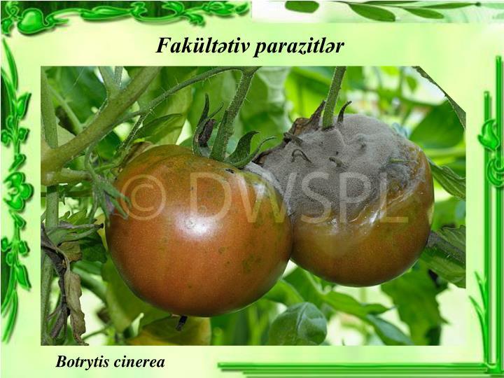 Fakültətiv parazitlər