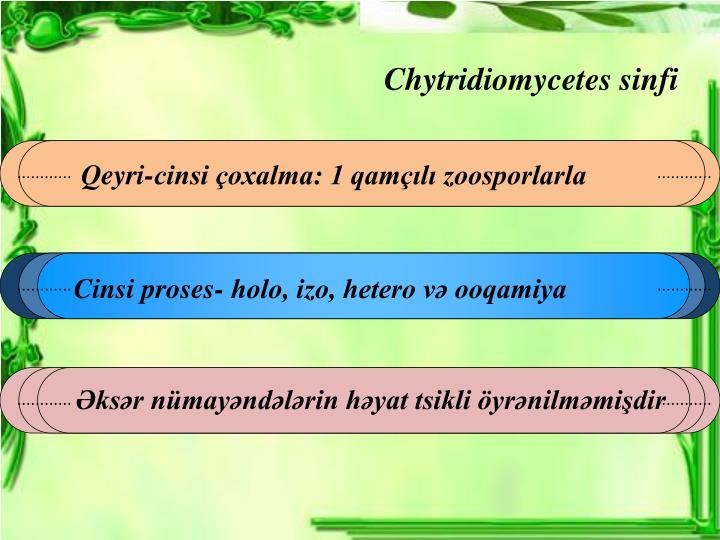 Chytridi