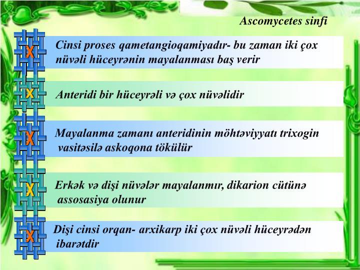 Ascomy