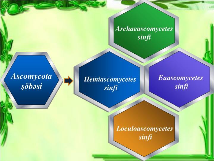 Archaeascomycetes