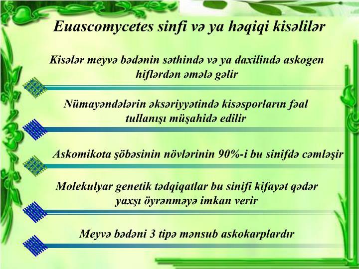 Euascomycetes sinfi və ya həqiqi kisəlilər