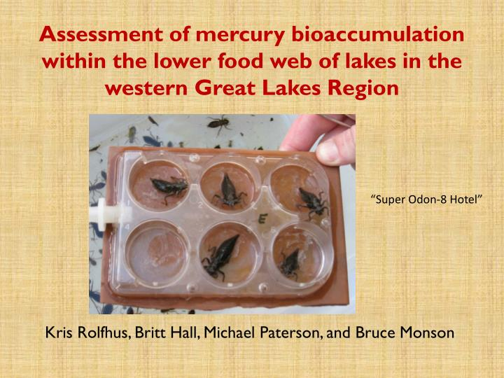 Assessment of mercury bioaccumulation within the lower food web of lakes in the western Great Lakes ...