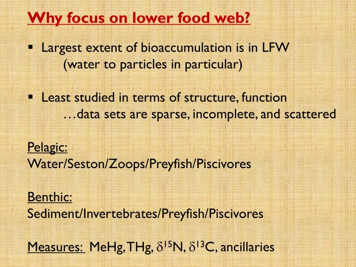 Why focus on lower food web?