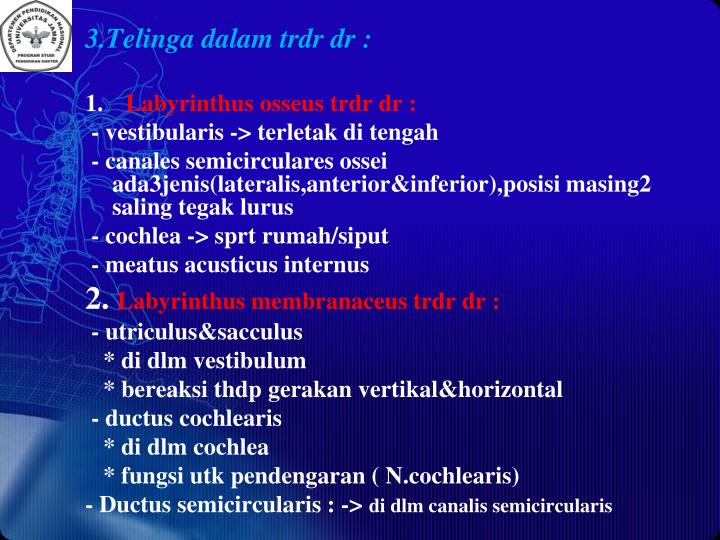 3.Telinga