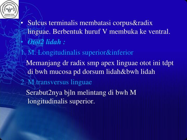 Sulcus terminalis membatasi corpus&radix linguae. Berbentuk huruf V membuka ke ventral.
