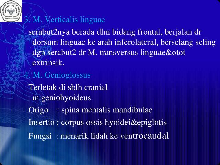 3. M. Verticalis linguae