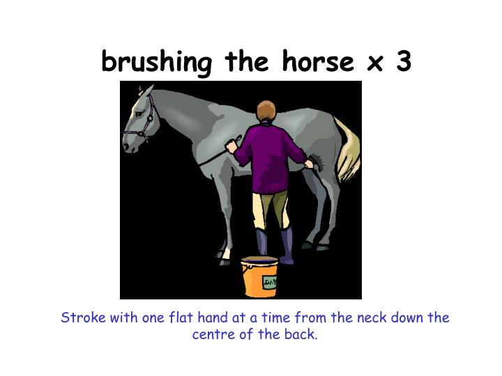 brushing the horse x 3